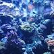 Aquarium of the Pacific 075