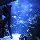 Aquarium of the Pacific 076
