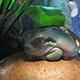 Aquarium of the Pacific 077