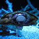 Aquarium of the Pacific 079