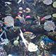 Aquarium of the Pacific 082