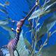 Aquarium of the Pacific 083