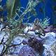 Aquarium of the Pacific 084