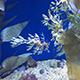Aquarium of the Pacific 086