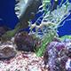 Aquarium of the Pacific 087