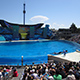 SeaWorld San Diego 032