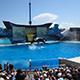 SeaWorld San Diego 033