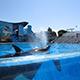 SeaWorld San Diego 034