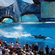 SeaWorld San Diego 036