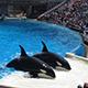 SeaWorld San Diego 039