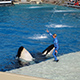 SeaWorld San Diego 041
