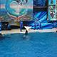SeaWorld San Diego 045