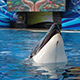 SeaWorld San Diego 046