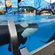 SeaWorld San Diego 048