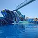 SeaWorld San Diego 051