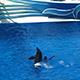 SeaWorld San Diego 053