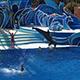 SeaWorld San Diego 055