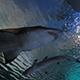 SeaWorld San Diego 076