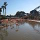 SeaWorld San Diego 099