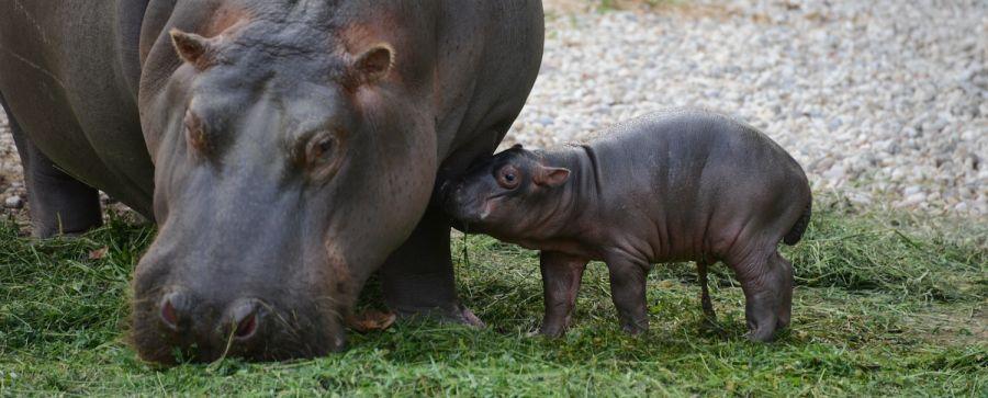 Parco Natura Viva Scopriamo tutte le mamme allo Zoo