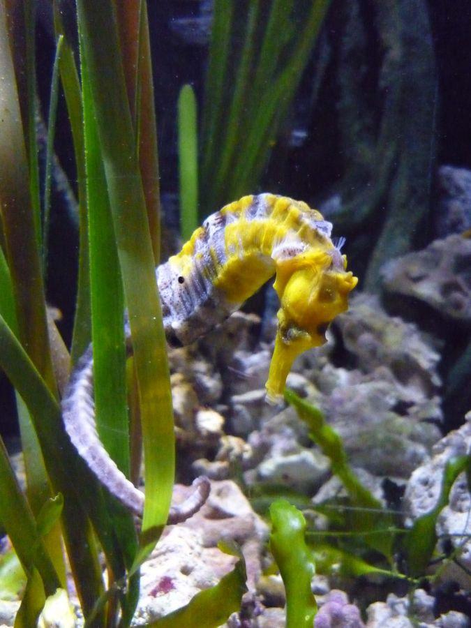 Sea Life Jesolo Ferragosto al SeaLife