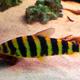 Aquatopia 020