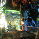 Aquatopia 021