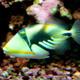 Aquatopia 034