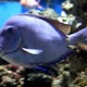 Aquatopia 035
