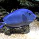 Aquatopia 036