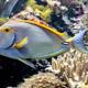 Aquatopia 051