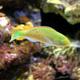 Aquatopia 052