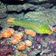 Aquatopia 074