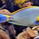 Aquatopia 080