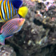 Aquatopia 093