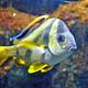 Aquatopia 117