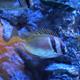 Aquatopia 127