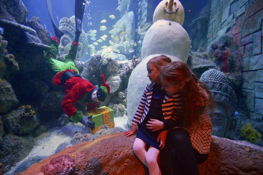 Sea Life Jesolo Babbo Natale dentro l'acquario