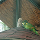 Etnaland Themepark 052