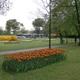 Parco Giardino Sigurtà 003