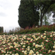 Parco Giardino Sigurtà 052
