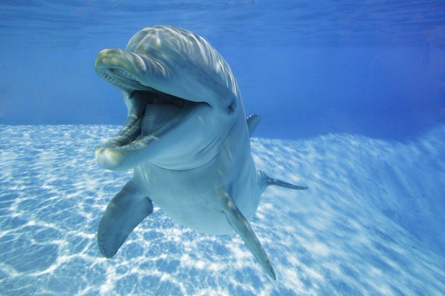 Zoomarine (Roma) Salvamamme emozioni tra i delfini