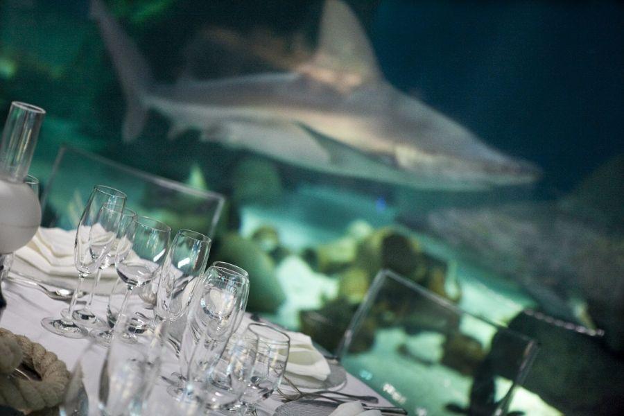 Acquario di Genova San Valentino: cin cin con gli squali