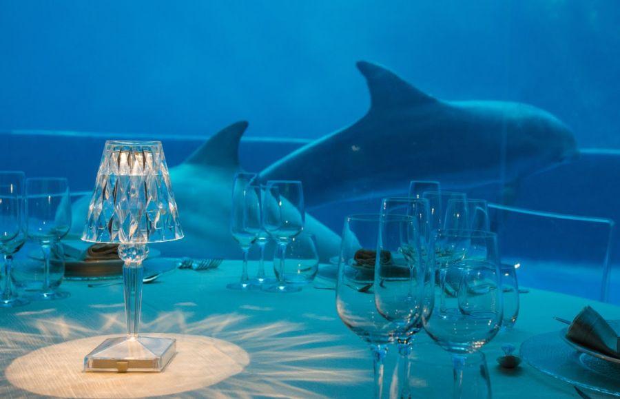 Acquario di Genova Cenone con vista delfini e tutto il programma di Natale