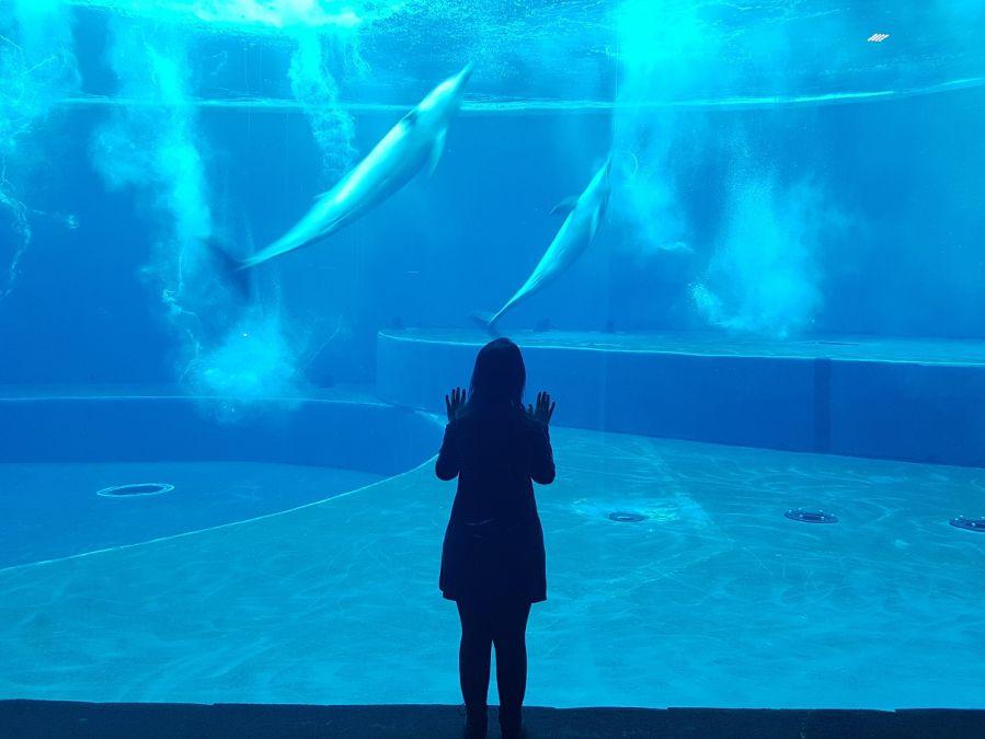Acquario di Genova [VIDEO] Acquario in festa e Capodanno tra squali e murene