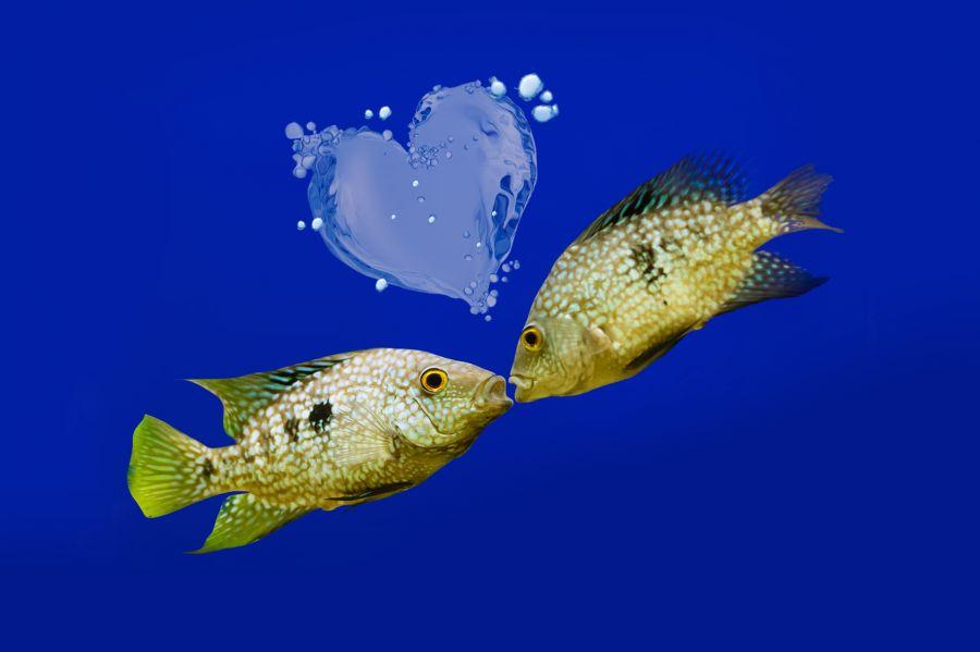 Sea Life Jesolo 2x1 per tutti gli innamorati