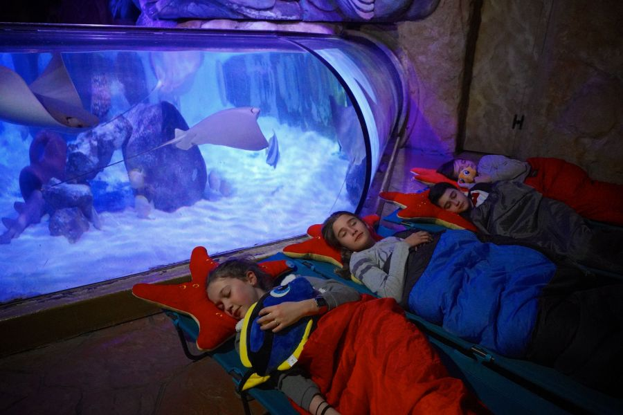 Gardaland Sea Life Aquarium Una notte all'acquario: dormire in compagnia dei pesci