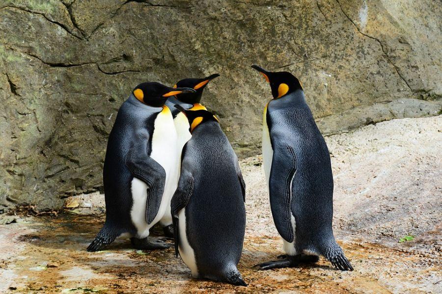 Zoomarine (Roma) Il parco festeggia i pinguini